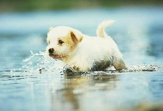 Puppy in Water